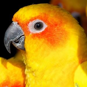 Ausgewähle Vogel Top Bilder für Internet 43