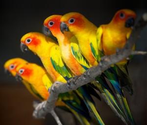 Vogelzentrum